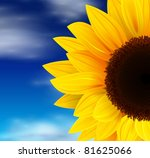 Summer Background  Sunflower...