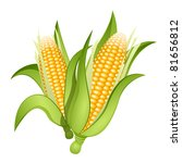 two ears of corn isolated | Shutterstock .eps vector #81656812