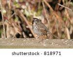 bird   Shutterstock . vector #818971