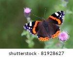 Red Admiral Butterfly   Vaness...