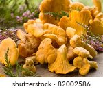 fresh chanterelle mushrooms. selective focus - stock photo