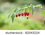Small photo of Abutilon megapotamicum. Brazilian Bell Flower.