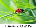 Ladybug Running Along On Blade...