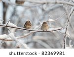 Two Sparrows On The Tree With...