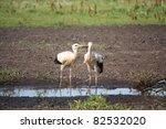 two white storks   Shutterstock . vector #82532020