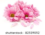 Stock photo blooming beautiful pink flower isolated on white background 82539052