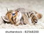 Stock photo funny kitten in carpet 82568200