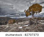 Tree In The Black Canyon Of Th...