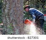 a logger is cutting down a... | Shutterstock . vector #827301