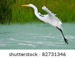 Great White Egret In Flight...