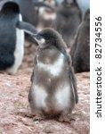 Penguin On The Stone Coast Of...