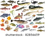 fish collection isolated on... | Shutterstock .eps vector #82856659