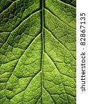 The leaf close up. Abstract background. - stock photo