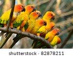 Sun Conure Parrot On A Tree...