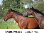 two horses nuzzling each other | Shutterstock . vector #83034751
