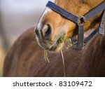 Beautiful young horse head detail - stock photo