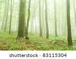beech forest in the summer... | Shutterstock . vector #83115304