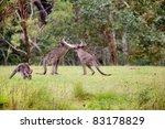 Male Fight Between Australian...