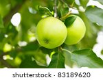 Closeup Of Green Apples On A...