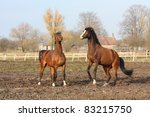 two brown horses playing with... | Shutterstock . vector #83215750