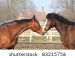 two brown horses playing with... | Shutterstock . vector #83215756