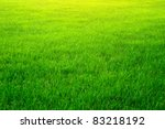 Green Grass Background Texture...