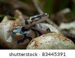Pythons Hatching In Everglades