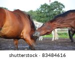 two horses playing | Shutterstock . vector #83484616