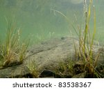 Underwater Shot Of Grass And...