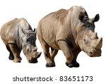 Two White Rhinoceros ...