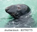 Grey Seal profile - stock photo