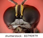 Ectemnius wasp - stock photo