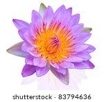 Lotus On Isolate Background