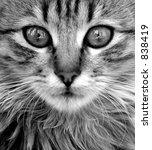 close up of cat | Shutterstock . vector #838419