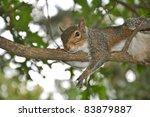hanging around | Shutterstock . vector #83879887