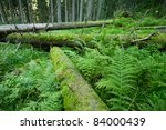 fairy forest with fallen trees covered with moss - stock photo