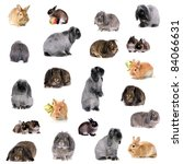 Stock photo group of different breeds of rabbits 84066631