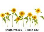 set of gerbera blossom  isolated   Shutterstock . vector #84085132