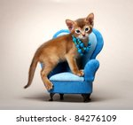 Stock photo abyssinian kitten age month 84276109