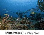 fish swimming among sea rods... | Shutterstock . vector #84438763