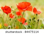 close up poppies in a green... | Shutterstock . vector #84475114