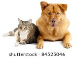 Cat and dog on white background - stock photo