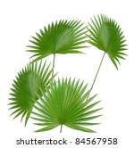 the palm leaves isolated white - stock photo