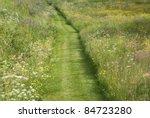 Path Through Meadow Of Wild...
