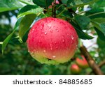 Red Apple Grow On A Branch...