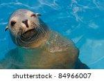 Winking California Sea Lion...