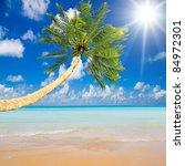 Palm Over Beach Blue Paradise