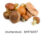 Various Wild Forest Mushrooms...