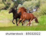two horses galloping in the... | Shutterstock . vector #85032022