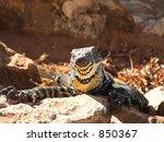 goanna at renmark  2    Shutterstock . vector #850367